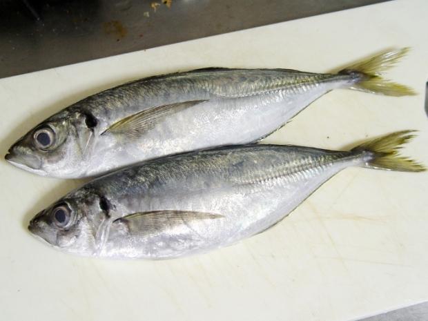 Balık eti
